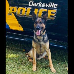 """Family Donates Bullet Proof Vest for Clarksville Police K9 """"Argo"""""""
